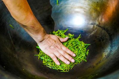 Das Rösten von grünem Tee in der Pfanne